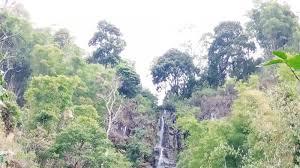 Desa Colol Matim Ditetapkan Sebagai Desa Wisata Kopi