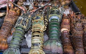 2 Nelayan Asal NTB Tangkap Ratusan Lobster di Perairan NTT