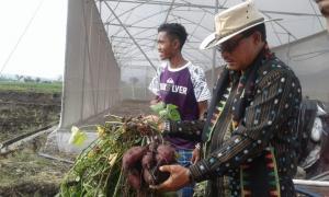 Hari Pangan Sedunia di Satar Mese, Bupati Deno Dorong Pemuda Kelola Sektor Pangan