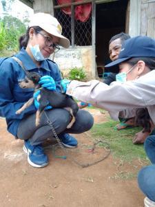 Cegah Rabies, Pemkab Manggarai Gencar Lakukan Vaksin Terhadap HPR